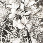 Fleur-de-pommier-50x40-Crayon-gras